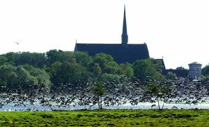 Gäss o Klosterkyrkan